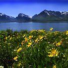 Grand Teton by Christopher Barker