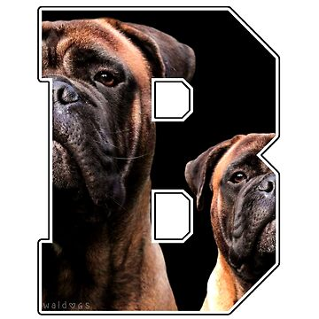 Bullmastiff Double B by waldogs