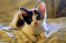 Little Precious  by Lesley Ortiz