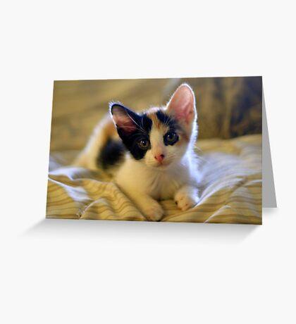 Little Precious  Greeting Card