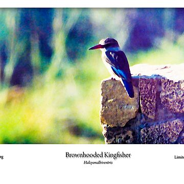 Limited Edition Prints - Avian by spotlightkid