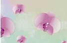 Orchid Mist by Barbora  Urbankova
