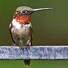 Ruby throated Hummingbird by Enola Wagner