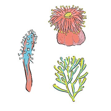 Corals from the sea by VeeraNoir