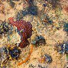 Sea Garden by Richard  Windeyer