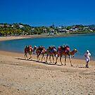 Camel Train by Richard  Windeyer