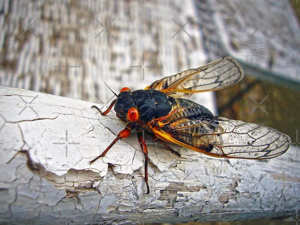 Red Eyed Cicada by FrankieCat