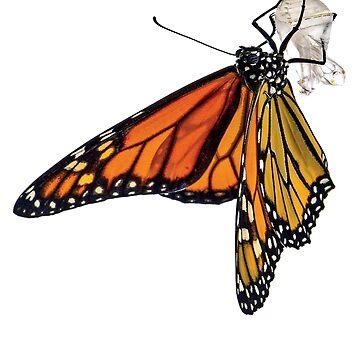 Monarch Butterfly design by Jobrien58