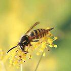 Fennel feeding wasp by missmoneypenny