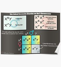 Sex-Linked Rezessive Störung auf dem X-Chromosom Poster