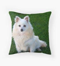 American Eskimo Dog 3 Throw Pillow