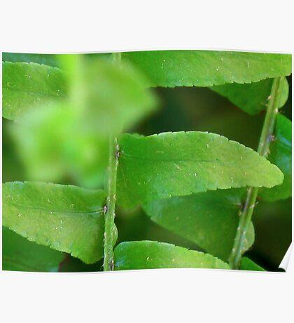 Gentle Fern Leaves Poster
