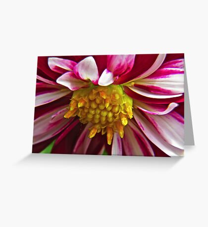 Pink Striped Flower with Yellow Buds Greeting Card