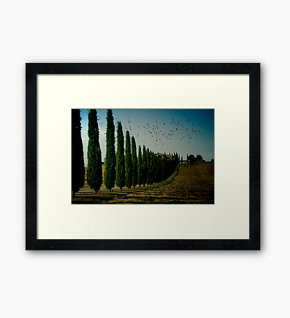 Cypress and Birds Framed Print