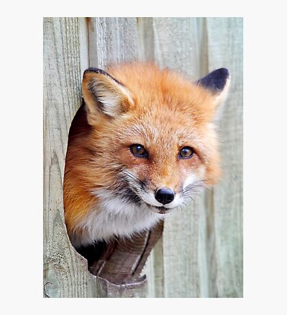 Fox Hole Photographic Print