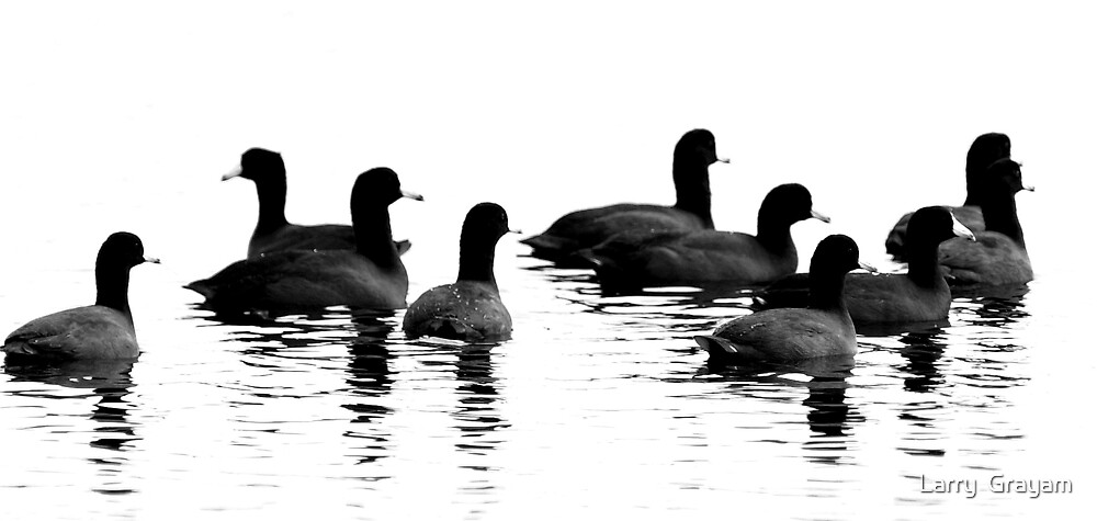 Coots by Larry  Grayam