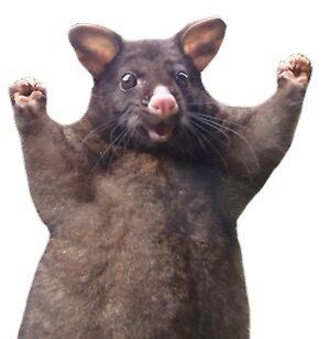 wahoo rat by deadtastic
