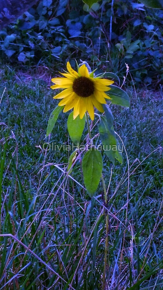 Blue Sunflower by OliviaHathaway