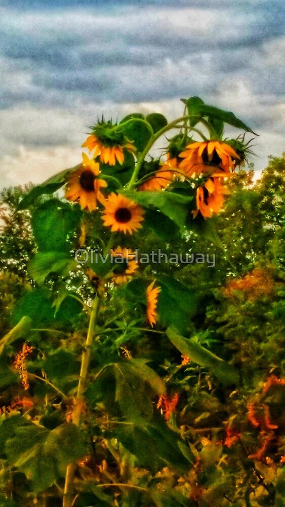 Sunflowers by OliviaHathaway