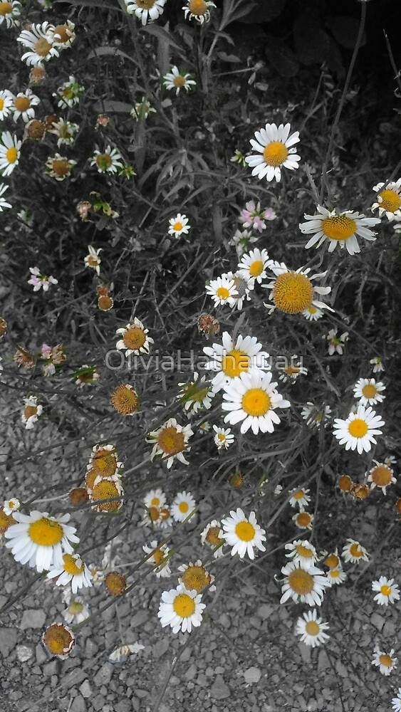 Black And White With Daisies by OliviaHathaway