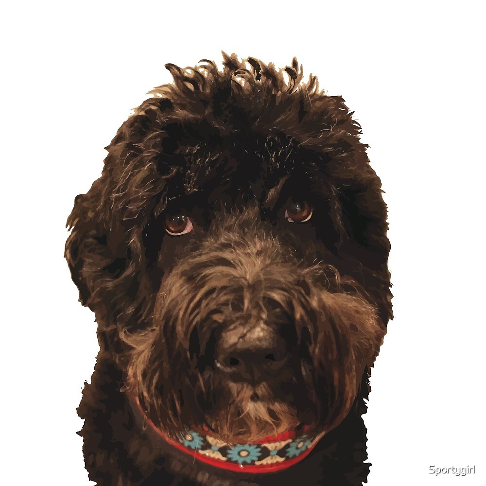 Portuguese Water Dog by Sportygirl