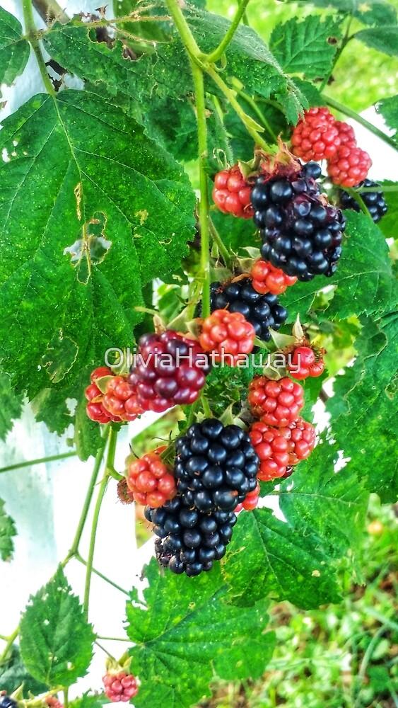 Blackberries by OliviaHathaway