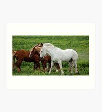 Running with Draft Horses Art Print