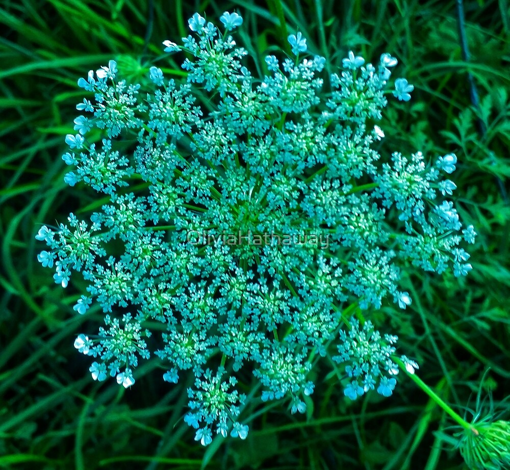 Turquoise Queen Anne's Lace by OliviaHathaway