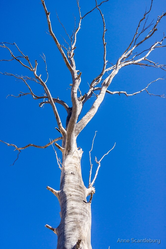 White tree. by Anne Scantlebury