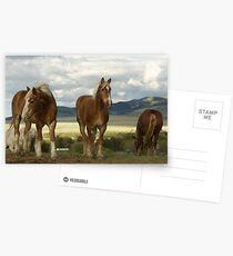 Gentle Giants Postcards