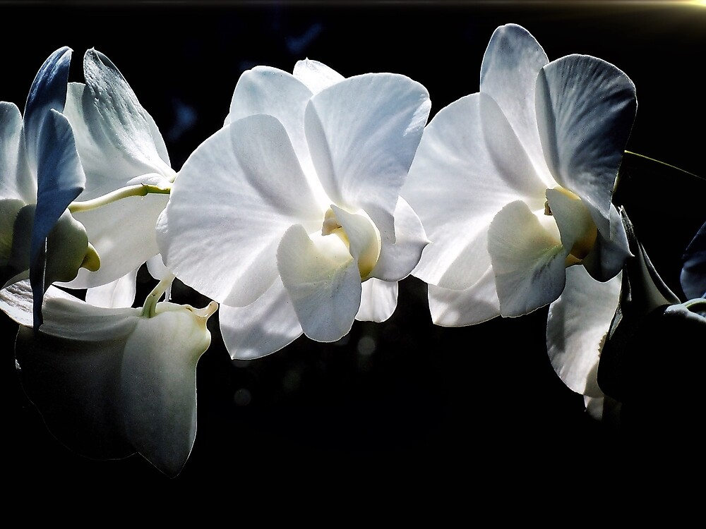 Awesome orchid  by DerekEntwistle