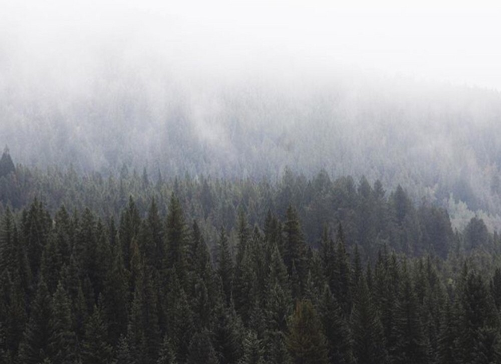 FOG IN THE TREES by Kenzie N