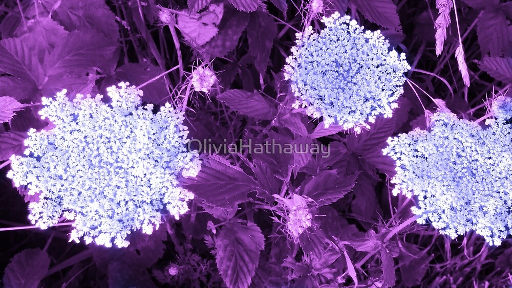 Queen Annes Lace with Purple Leaves by OliviaHathaway