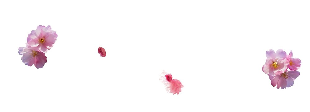 Sakura by artistokat