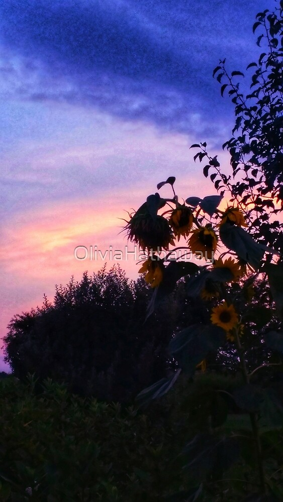 Sunflower Sunset II by OliviaHathaway