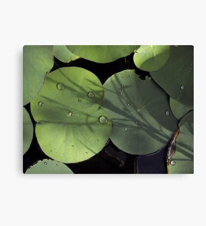 Light and Shadows Canvas Print
