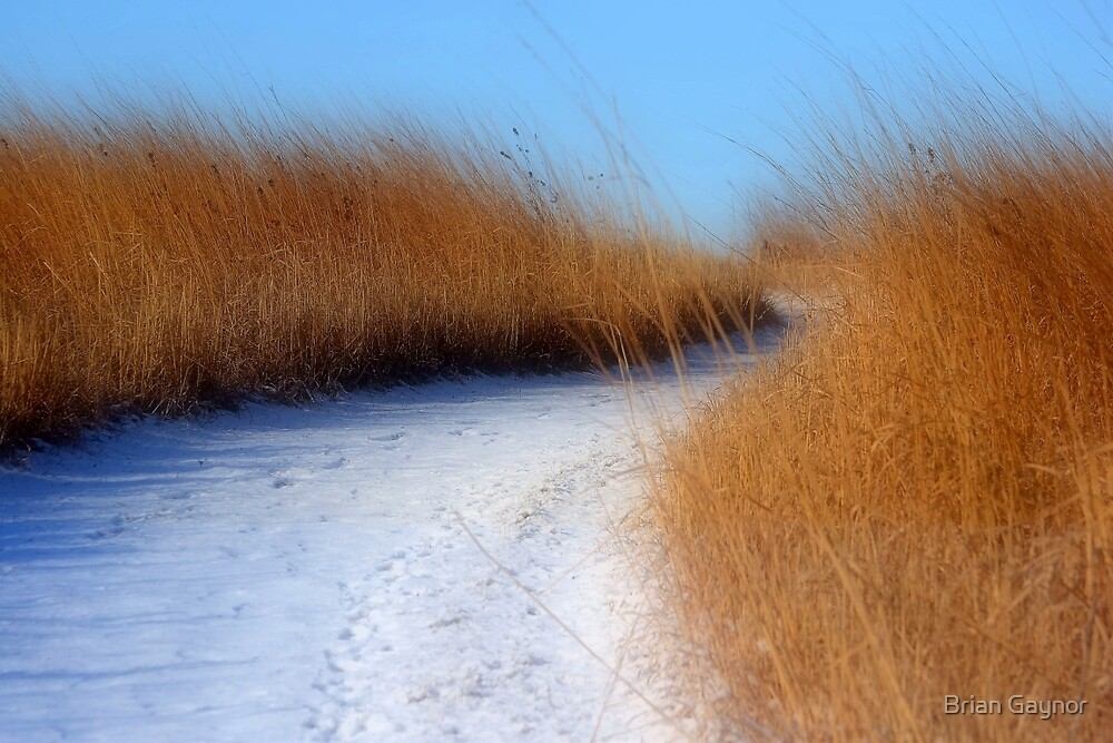 Off the Beaten Path by Brian Gaynor