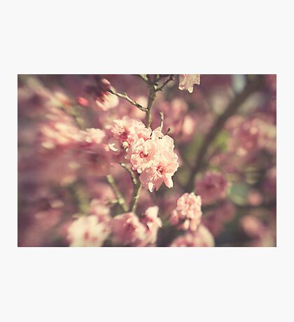 ~ the glitter of winter shines through a pale haze of spring ~ Photographic Print