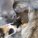 Kitty Go-Round ... come meal time by TLCGraphics