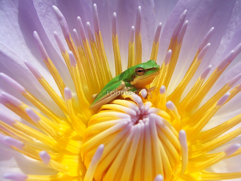 Water lily and friend by robmac