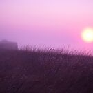 Early Morning in the Fog by Anthropolog