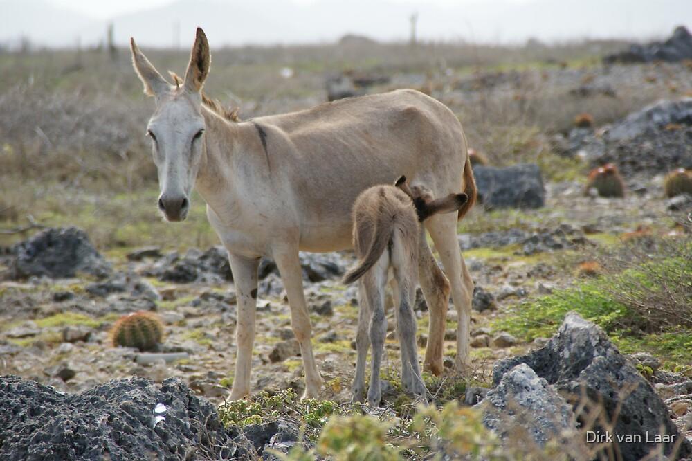 donkeys by Dirk van Laar