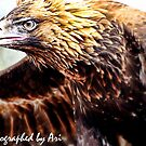 Eagle eyes--- by SAPARI