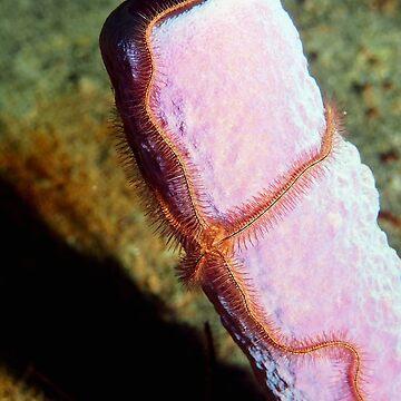 Sponge Brittlestar Starfish by Scubagirlamy