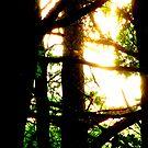 Camp Shine 4 by mooner1