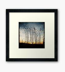 Forgotten flax at dawn Framed Print