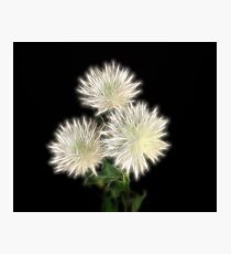 Electric Flowers! Photographic Print