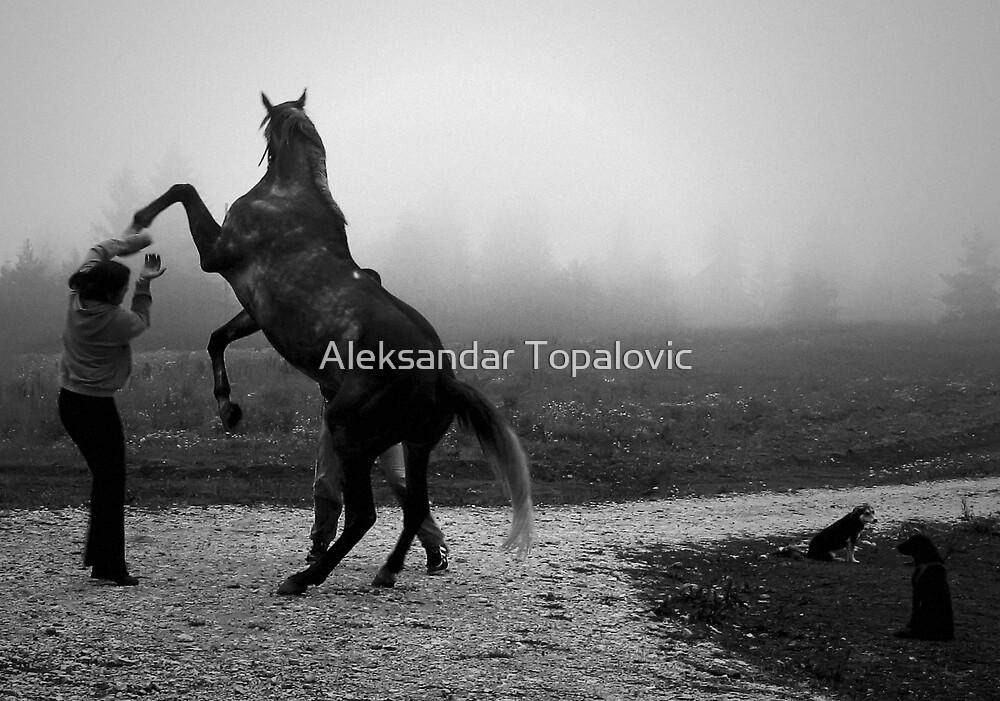 Foggy mountain. by Aleksandar Topalovic