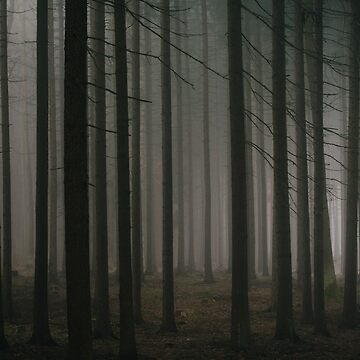 Dark morning forest by Hudolin