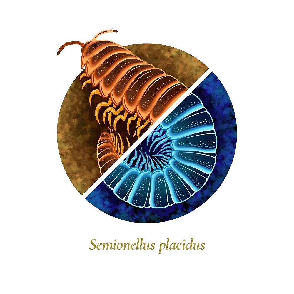 The Circles of Life: Semionellus placidus by Franz Anthony